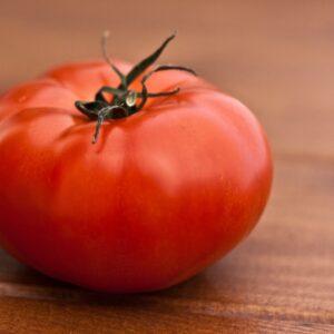 Tomate Saint Pierre plant potager