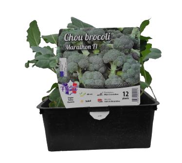 Choux brocoli barquette