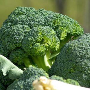 Choux brocoli légume